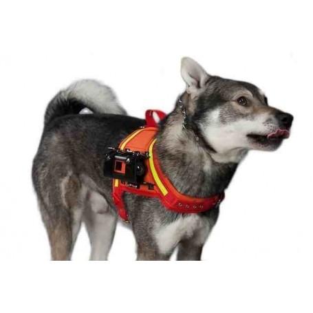 Video camara Canidog para perros HD